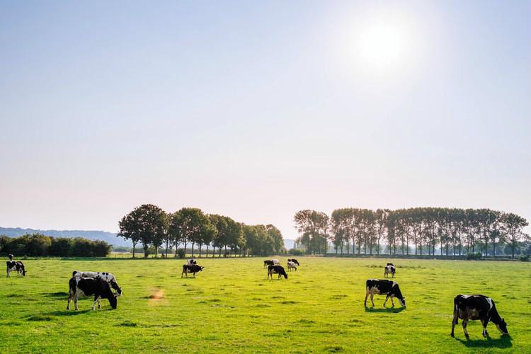 新西兰引入了更严格的牲畜运输规则
